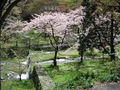 20060416kawatosakura