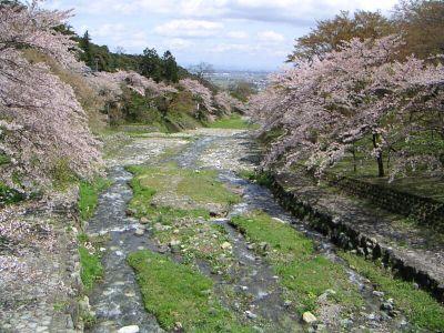20060416sakuratokawa2