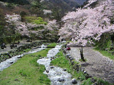 20060416sakuratokawa3