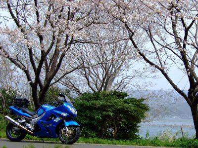 20070401sakura