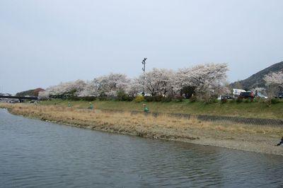 20070408isuzugawa4