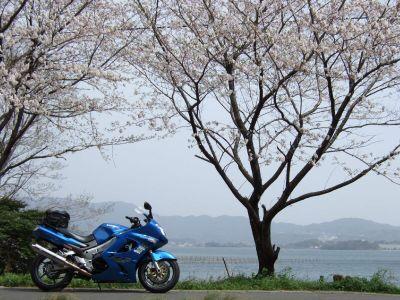 20070401sakura1