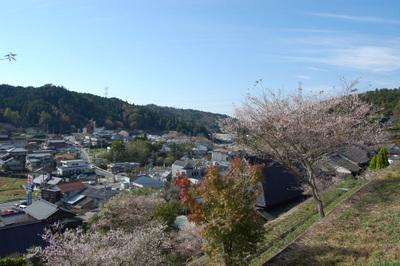 20111113obarashikisakura05