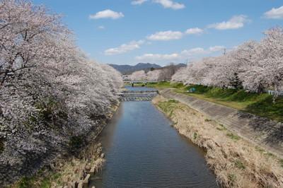 20120407sakura01