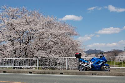 20120407sakura02