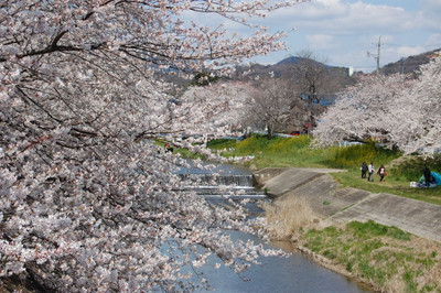 20120407sakura04