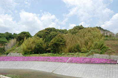 20120528shintoumei01