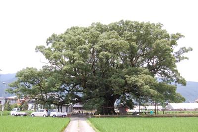 20120730shikokukamonoookusu03