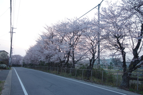 20150331sakura14