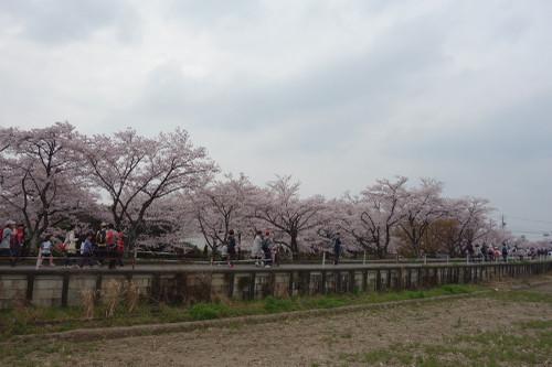 20160402sakura02