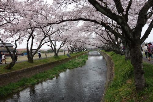 20160402sakura03