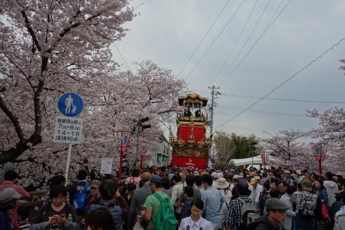 20160402sakura12