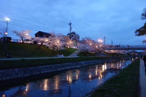 20160402sakura16